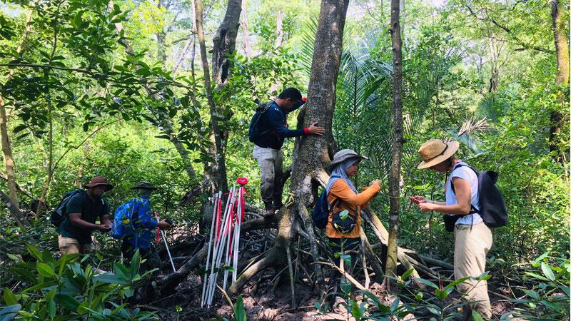 Mangrove Trees Inventory Works By Arborist