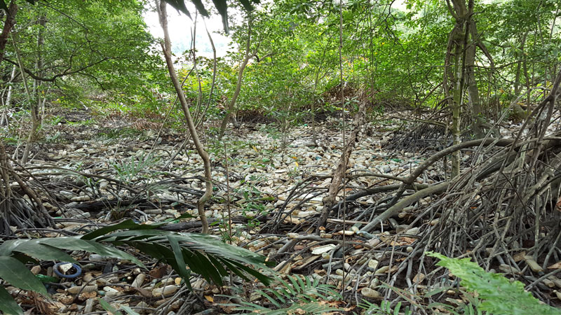 Selangor Maritine Gateway - Mangrove Trees
