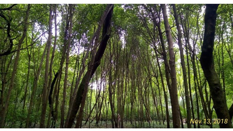 Selangor Maritime Gateway - Mangrove Trees