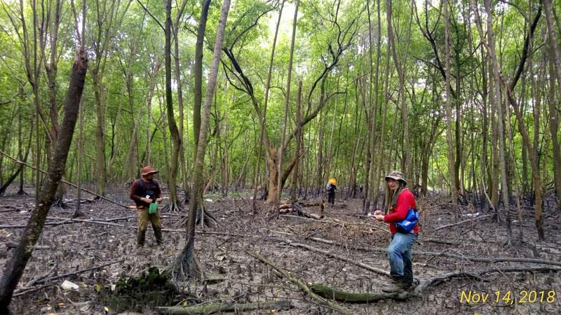 Inventory Works With Renjer Jabatan Hutan Daerah Pantai Klang