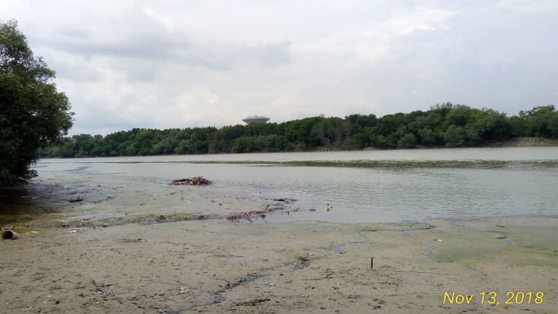 Mangrove Point At River Side During Low Tide